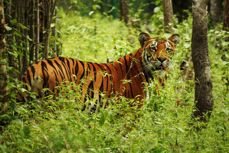 Galaxy Adventure 187 Chitwan National Park